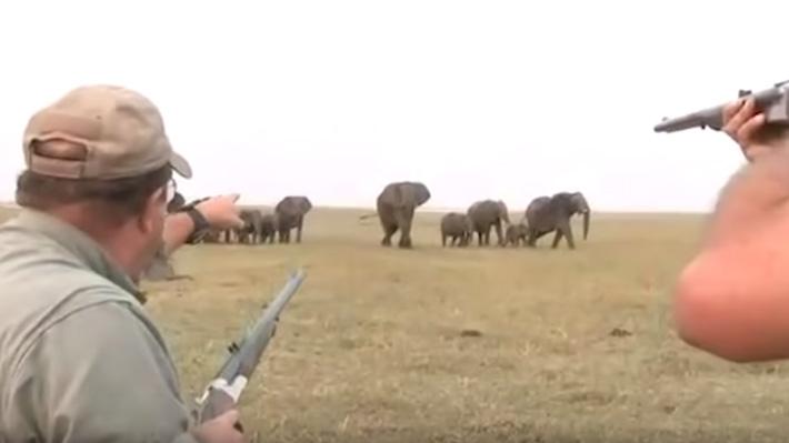 Video: La furiosa respuesta de una manada de elefantes después de que unos cazadores mataran a su líder