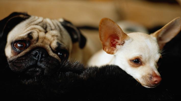 Veterinarios advierten que perros podrían deprimirse ante adicción al celular de sus dueños