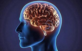 Estudio del MIT revela que el cerebro utiliza experiencias previas para enfrentar lo desconocido