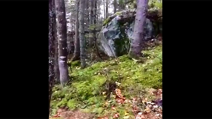 Video: Las sorprendentes imágenes de un bosque que parece estar respirando