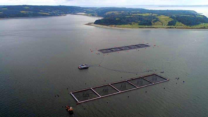 SMA formula cargos a Marine Harvest por posible daño ambiental tras fuga de salmones