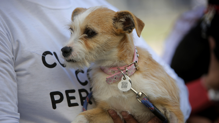 Registro de mascotas suma 136 mil inscripciones, pero crecen ataques de perros a personas