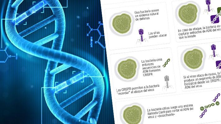 Cómo es el cuestionado método utilizado por científico chino que permite reemplazar partes de ADN