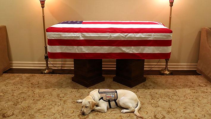 Conmovedora imagen: Sully, el fiel perro de George H.W. Bush, custodia el ataúd de su amo