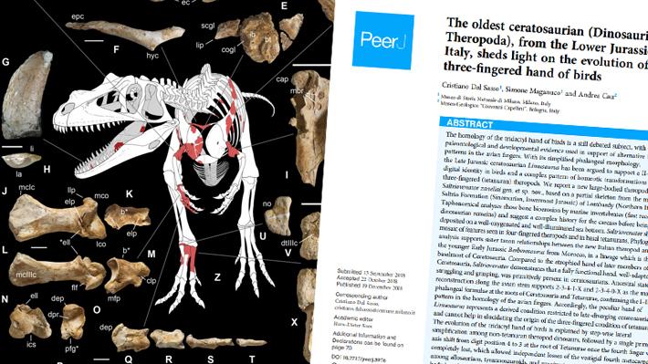 Vivió hace 198 millones de años: Paleontólogos italianos descubren en los Alpes al dinosaurio depredador más antiguo
