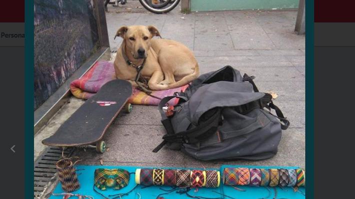 Sota, la perra que murió por un disparo de la policía de Barcelona: Animalistas exigen saber la verdad
