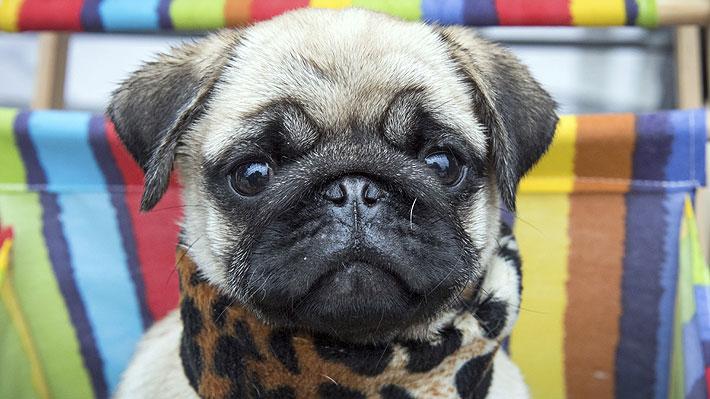 Prohíben la venta de perros y gatos menores de seis meses en las tiendas de mascotas de Gran Bretaña