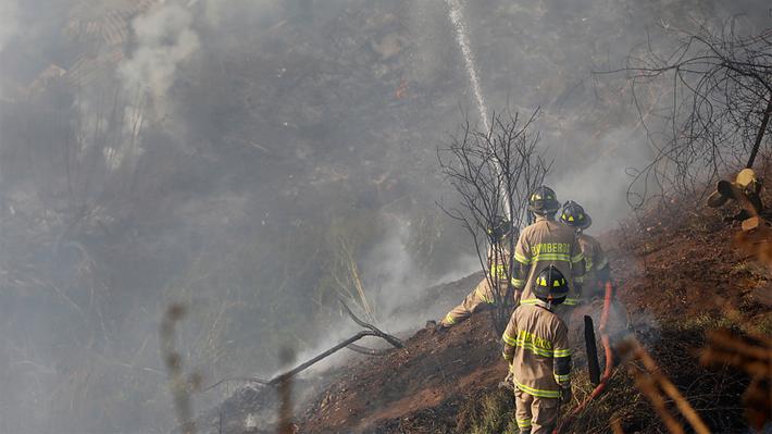 Incendio forestal en la Región de O'Higgins obliga a evacuar sectores de Navidad