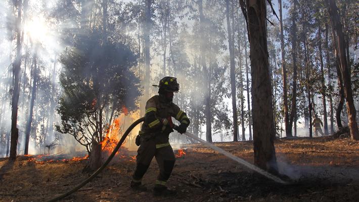 Vigilancia, desmalezado y capacitaciones: Cómo se preparan distintas comunas para enfrentar incendios forestales