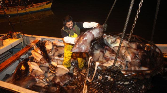 """""""Guerra de la jibia"""": El proyecto que quedó listo para ser ley y que enfrenta a pescadores artesanales e industriales"""