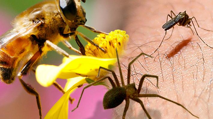 Plagas de insectos en verano: Cómo prevenirlas y qué hacer para evitar el uso de productos químicos para eliminarlas