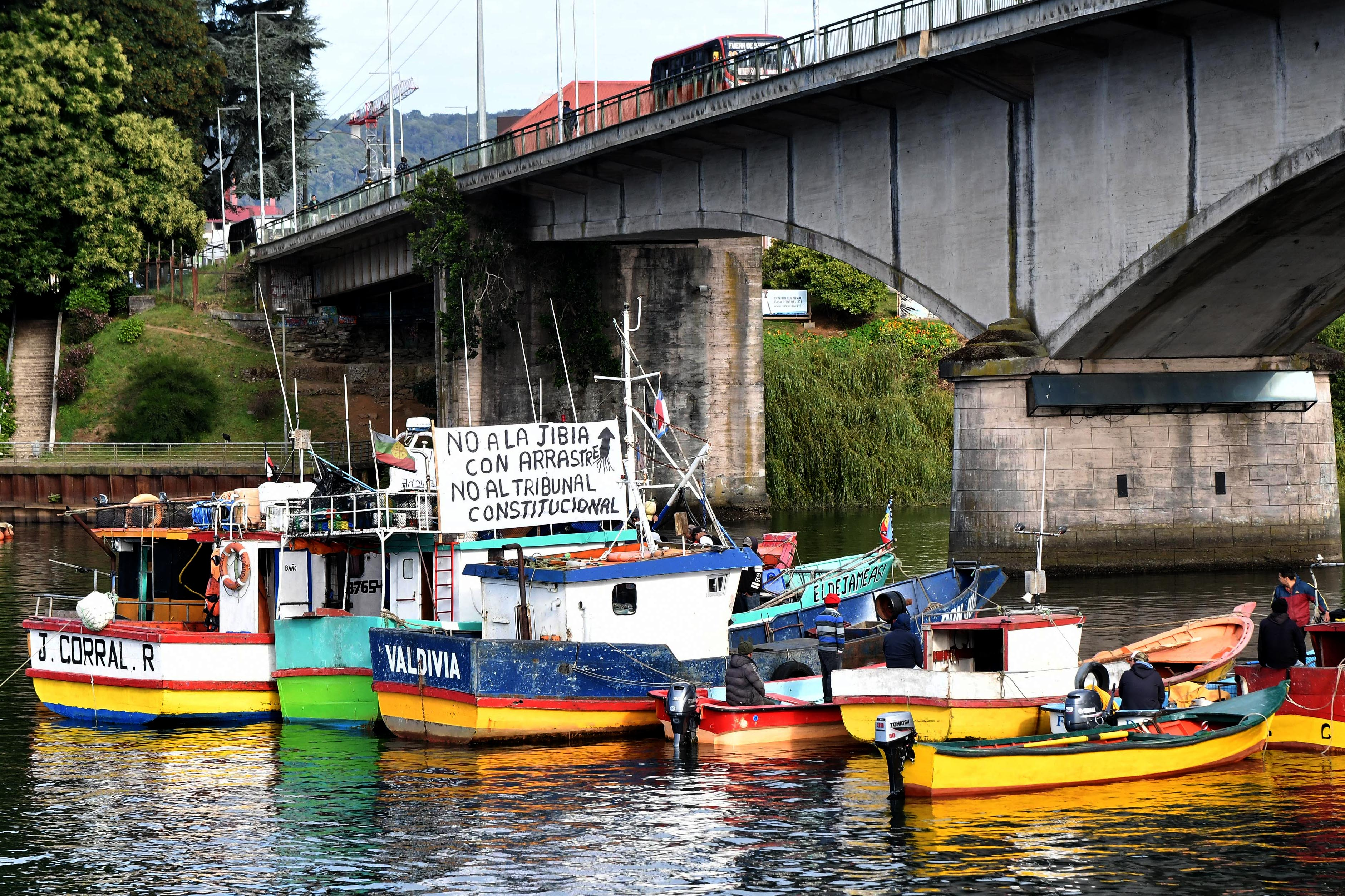 """Asociaciones pesqueras rechazan veto del Gobierno y dicen que no se """"puede capturar jibia con el arte de cerco"""""""