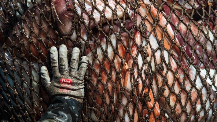 Gobierno se reúne esta tarde con pescadores artesanales de la jibia en medio del rechazo al veto