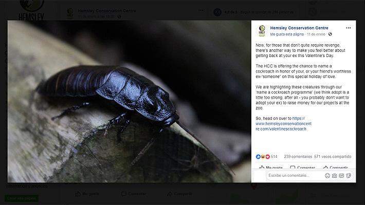 Bautizar a una cucaracha con el nombre de un ex: La campaña de un zoológico británico para San Valentín