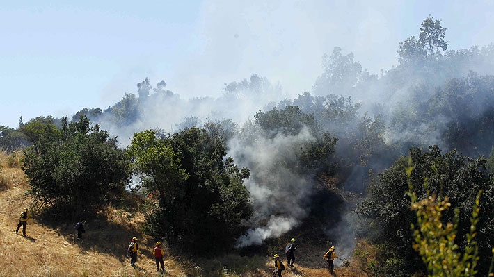 Intendencia de Aysén declara Alerta Roja por incendios forestales en Chile Chico y Cochrane