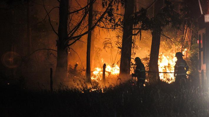 """Balance de Onemi: 21 incendios forestales """"relevantes"""" se encuentran activos en sur del país"""