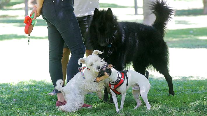 Este martes vence plazo para inscribir a tu mascota: Revisa los puntos clave de la ley de tenencia responsable