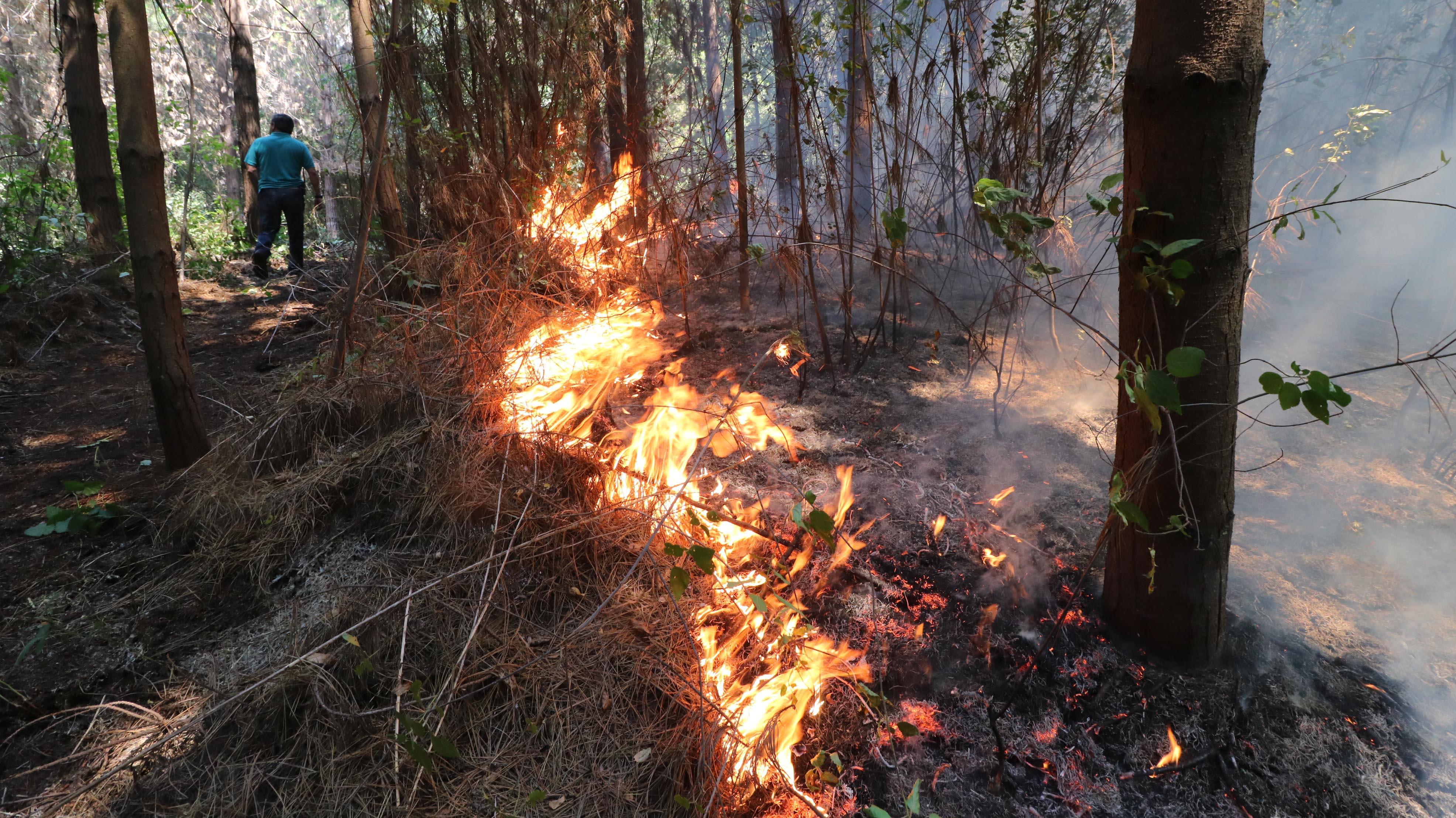 Onemi declara Alerta Roja para dos comunas de la región del Ñuble por incendios forestales