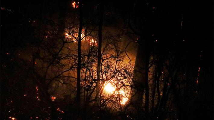 Incendios forestales: Llamas en Penco llegan a sectores poblados y evacúan a vecinos
