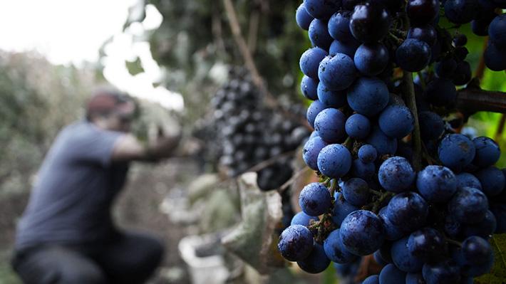 Uvas envenenadas: A 30 años de la denuncia que puso en jaque al agro y tensionó la relación con EE.UU.