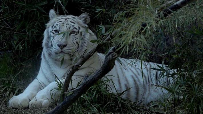 De Freddy Mercury a Kelú: Conoce los nombres de los animales más famosos del Zoológico Nacional