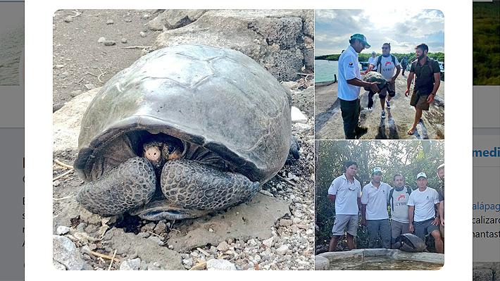 Hallan en las Galápagos una tortuga gigante que se creía extinta desde hace casi 100 años