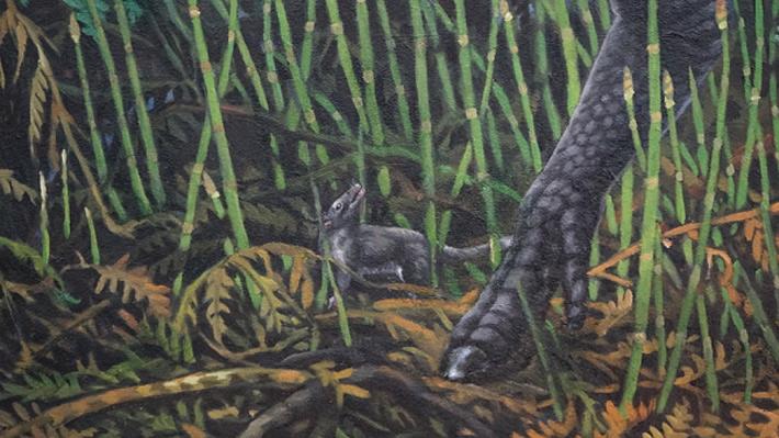 Descubren a un marsupial que vivía entre dinosaurios en la zona en que ahora está Alaska