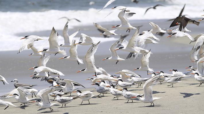 Descubren cuál es el plástico más letal para las aves marinas que mataría a 1 de cada 5 de ellas