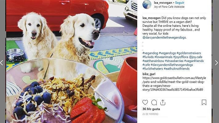 Mujer australiana decidió traspasar su estilo de vida a sus perros y criarlos bajo una dieta vegana