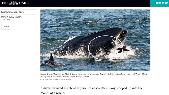 Experimentado buzo fue atrapado por una ballena en Sudáfrica e increíblemente resultó ileso