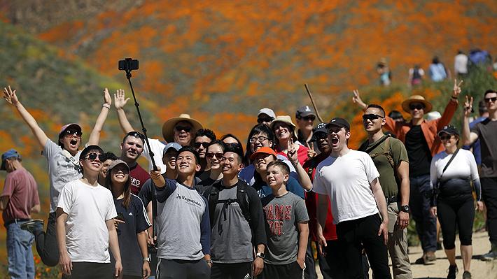 Campo de amapolas que floreció en California tuvo que cerrar tras avalancha de turistas por obtener selfies