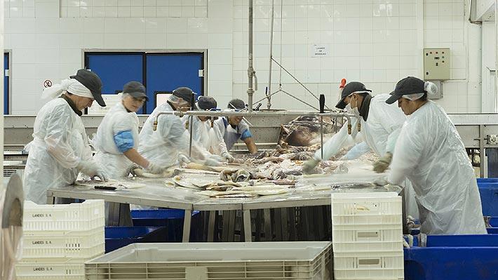 Asipes proyecta que se perderán 1.700 empleos por la Ley de la Jibia en la Región del Biobío