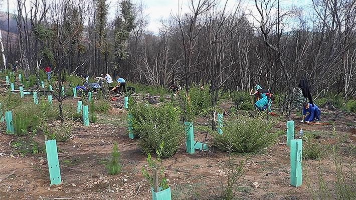 Campaña para reforestar Chile espera plantar cerca de 20 mil árboles nativos durante 2019