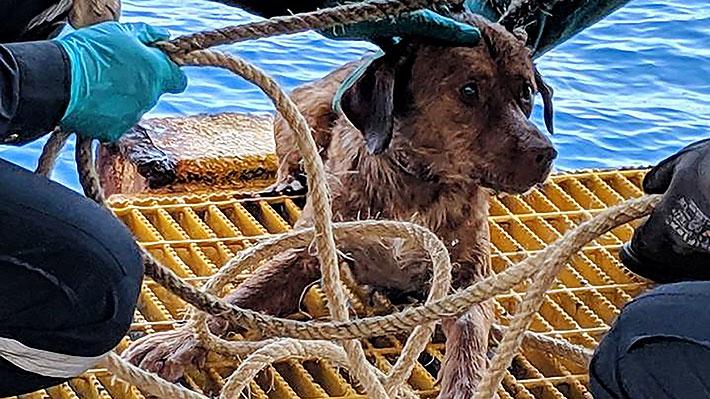 Trabajadores de un pozo petrolero rescatan a un perro de las aguas del Golfo de Tailandia: estaba a 220 km de la costa