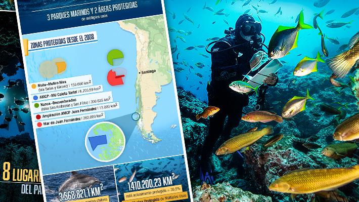 ¡Al fondo con Oceana! Sumérgete en los destinos que ha estudiado esta fundación para proteger el mar de Chile