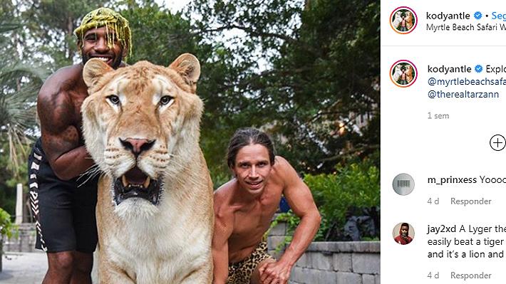 Apolo, el híbrido de una tigresa con un león que sorprende por su gran tamaño