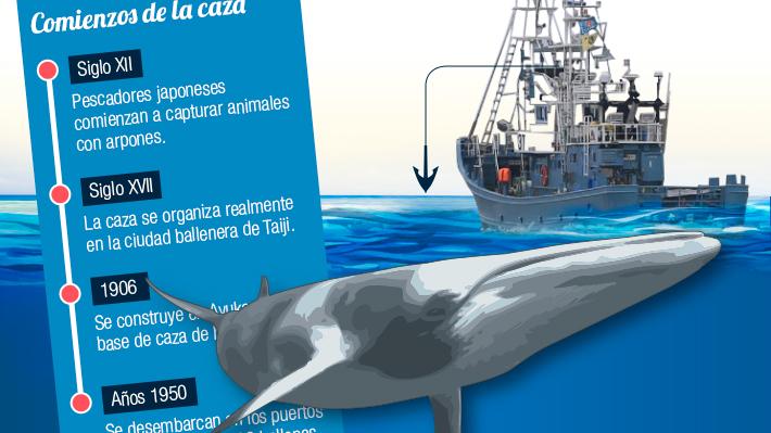 Japón reanuda la caza comercial de ballenas: Conoce cuántas y qué especies capturan