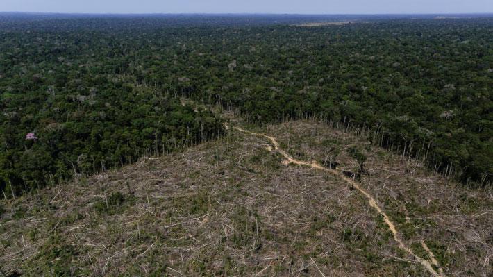 Deforestación de la Amazonía brasileña creció más del 88% en junio y pone en alerta a las organizaciones
