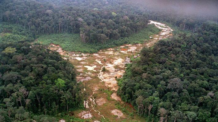"""Se encienden las alarmas sobre la desforestación en la Amazonía que estaría llegando a """"un punto de no retorno"""""""