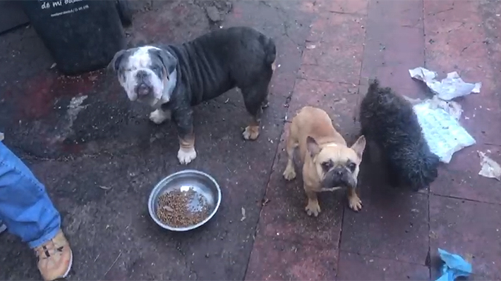 Detienen a sujeto acusado de maltrato animal en Providencia: Tenía 66 perros, 7 gatos y 7 aves en su casa