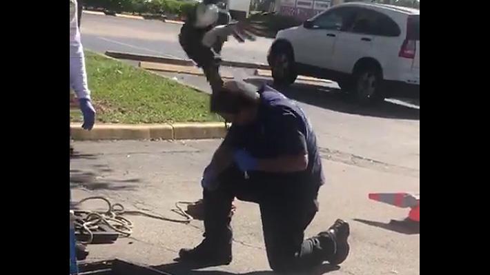 """Video: Pata demuestra su instinto materno y """"defiende"""" a sus crías de bombero que intentaba rescatarlas de un desagüe"""