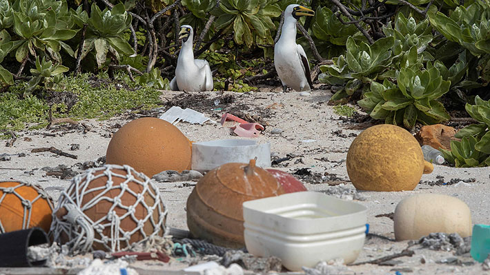 """Aislada y paradisíaca isla del Pacífico se """"ahoga"""" en plástico: residuos provienen de todo el mundo, incluido Chile"""