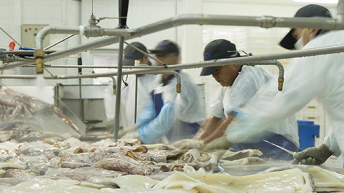PacificBlu inicia despido de 367 personas tras cierre de planta: Decisión está vinculada a la Ley de la Jibia