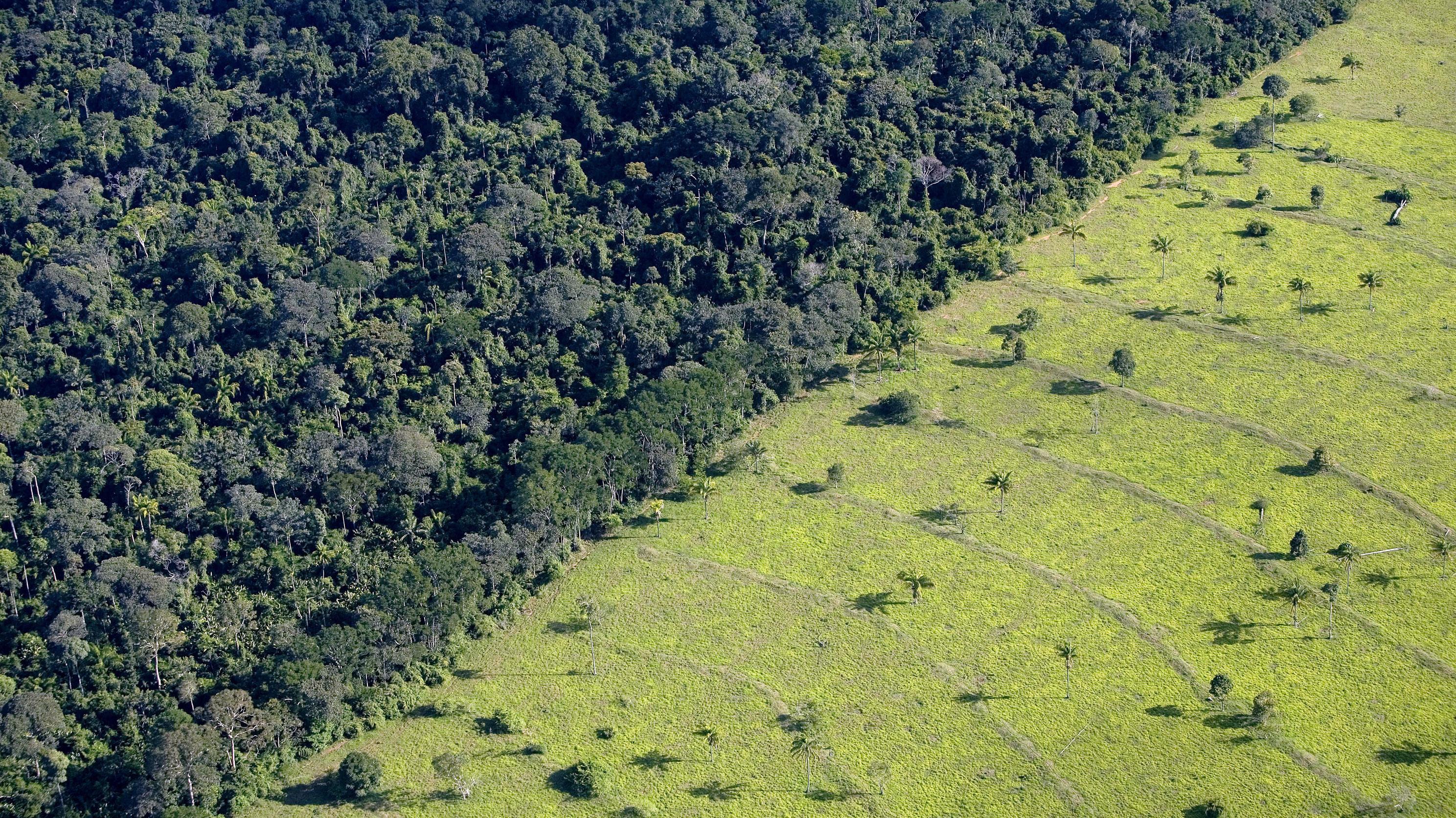 """Alemania justifica su decisión de congelar fondos a Brasil destinados al Amazonas por """"notable aumento de la deforestación"""""""