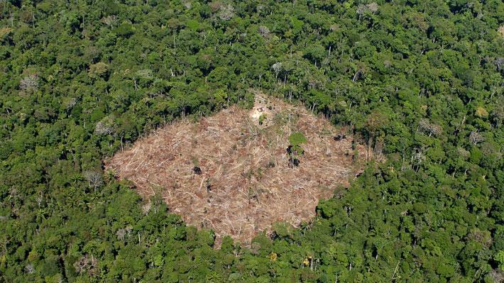 Noruega se suma a Alemania y decide dejar de enviar fondos a Brasil por la deforestación