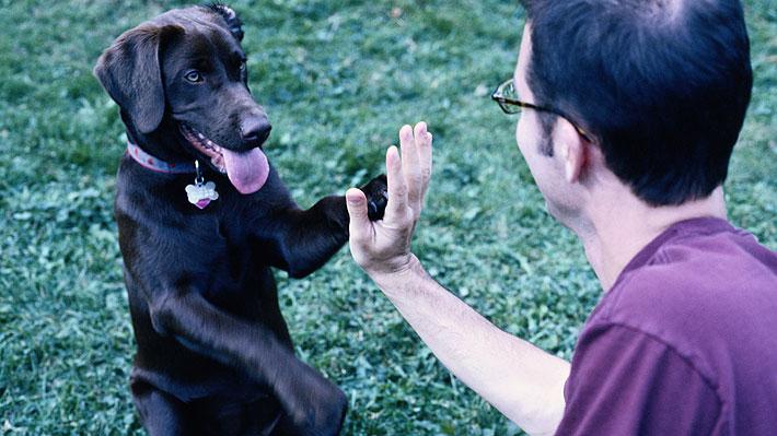 """¿Quieres tener un perro? Guía ideal para los """"dog lovers"""" te enseña cómo elegirlo"""