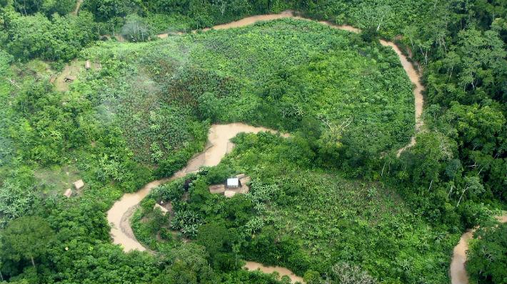 Los árboles en la Amazonia están absorbiendo menos CO2 de lo que se proyectaba