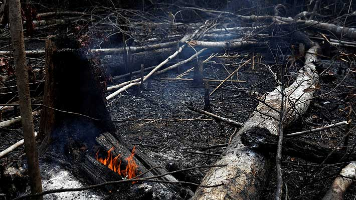 Movimiento fundado por Greta Thunberg protestará frente a embajadas de Brasil por incendio en el Amazonas