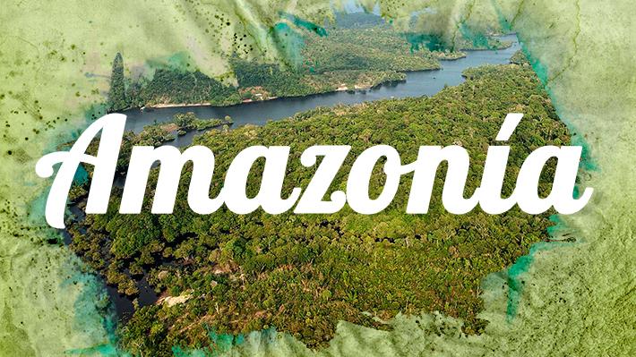 La importancia de la Amazonía en datos y cifras: Lo que debes saber sobre el pulmón verde de Sudamérica