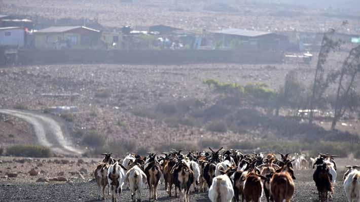 Los estragos de la sequía que golpea a comunas rurales de la Región Metropolitana